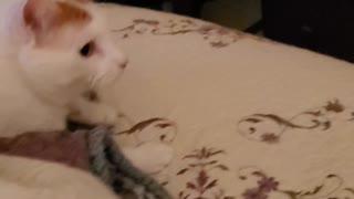 Ferocious kitty