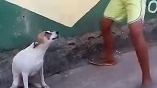 Dog dancing like a human