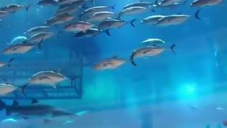 Dubai world biggest aquarium