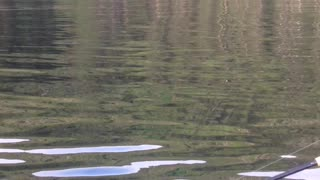 Beautiful Whale Breach in Alaska