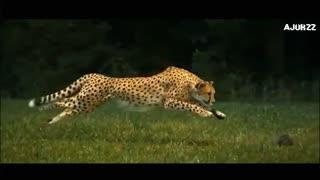 Hunting video 1
