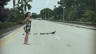 Woman helps duck family cross street in Collier County
