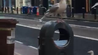 Seagulls taking over the street!!!