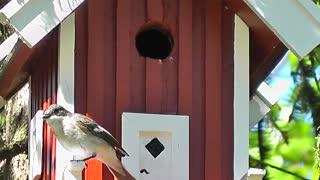 A beautiful bird guarding its nest