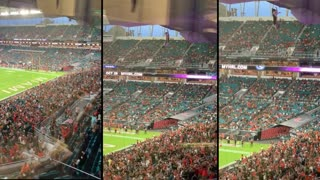 Stray cat saved by the U.S Flag at Miami Hard Rock Football Match
