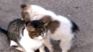 Puppy And Kitten Have Been Best Friends Since Born