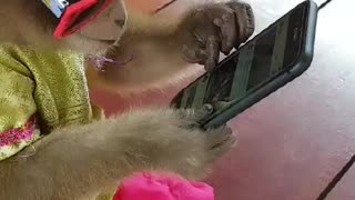 Chill Monkey Plays on Phone