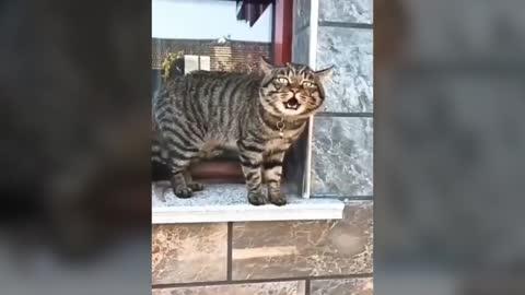 Cats talking can speak english