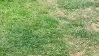 Dancing Dalmatian