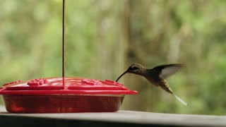 Do you know what this bird eats