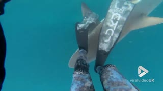 Spear fisher has close encounter with shark!