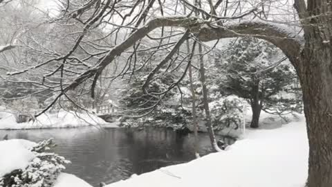 Ducks swimming in a pond while it snows