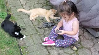 Adorable toddler plays with very intrigued kittens