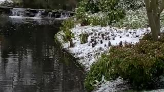 Snowing in London today 2021 natural