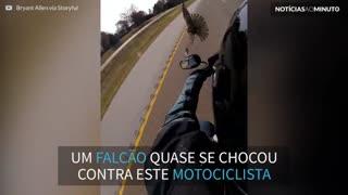 Motociclista em alta velocidade quase derruba falcão
