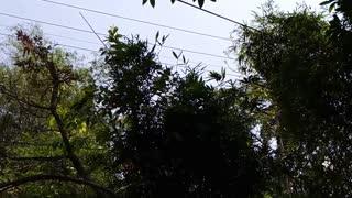 narrow walking and jump of a monkey   amazing jump