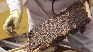 Das Bienenhaus1