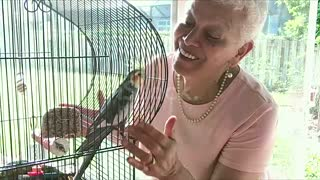 Parrot Discussion with woman