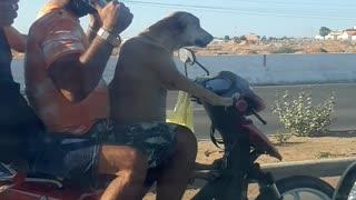 Dog chauffeurs his humans on motorbike