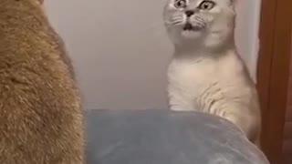 Fight cat crazy