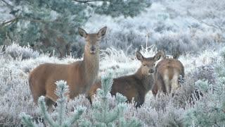 Deer Family - Funny