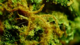 INSIDE THE marijuana