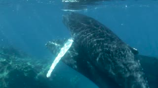 very close with a humpback whale calf!