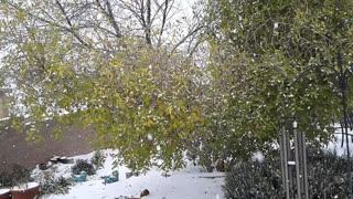 Snow Storm NM