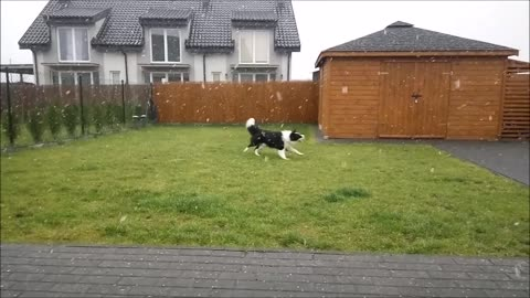 Dog celebrating first snowfall is all of us