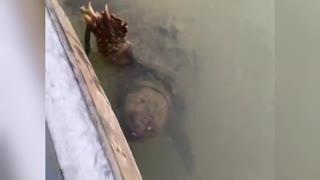 Turtle shoot