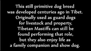 Things You Didn't Know About The largest Dog breeds