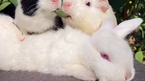 So cute pets, they are showing affection
