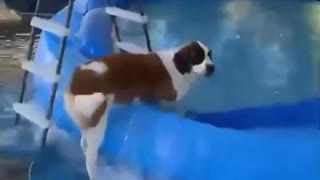 You Will Not Believe What This Dog Did./ Funny Videos 2021