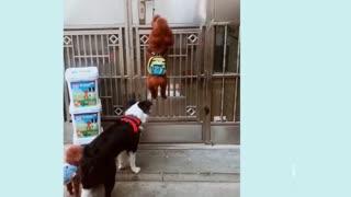 Smart dog opening their door