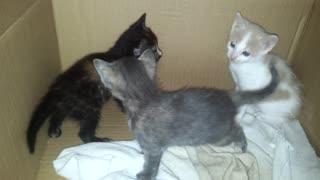 Adorable little cats