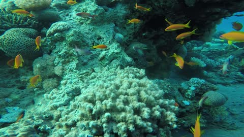 Coral reefs and water plants in the Red Sea, Eilat Israel 2