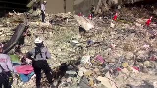 Dogs search for survivors at Florida condo collapse