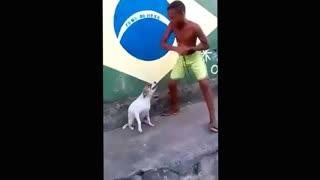 super dance super dog