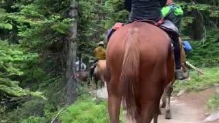 a mountain climbing horse