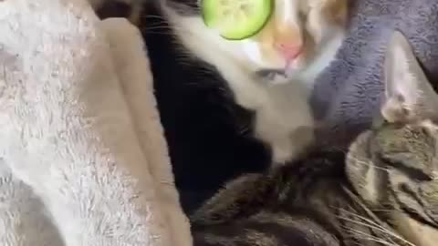 cats SPA