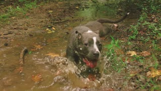 What happen when a dog getting wet in a creek