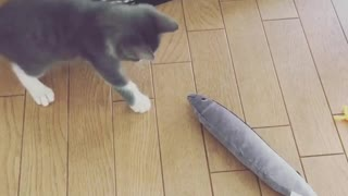 Cat likes his Fish Toy