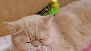 Parrot and cat share truly special friendship