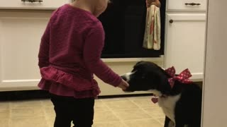Toddler makes her puppy sit for treats