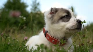 Puppy dog in grass