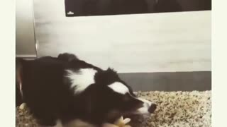 Dog's favorite song