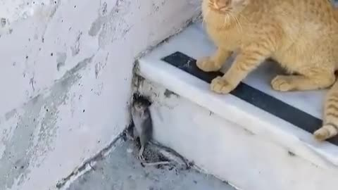 Tom & Jerry real life!