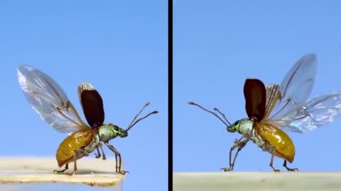 How it flies