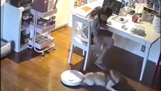 dog vs vacuum cleaner