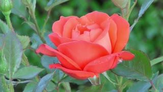 beauty _ nature _flowers